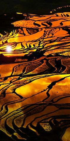 诺一的相册-梯田. Rice fields at sunset