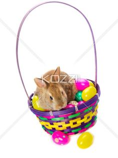 bunny in easter basket with easter eggs - Bunny in easter basket with colorful Easter eggs on white background