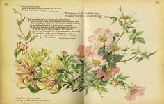 """english-idylls: """" Dog Roses and Honeysuckle by Edith Holden, from The Country Diary of an Edwardian Lady. Garden Journal, Nature Journal, Junk Journal, Bullet Journal, Botanical Art, Botanical Illustration, Edith Holden, Nature Artists, Art Journal Inspiration"""