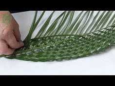 Contemporary Flower Arrangement by Gill McGregor including plaited palm leaves and 'tubing'; one of the techniques presented in Techniques Used In Contem. Contemporary Flower Arrangements, Creative Flower Arrangements, Tropical Flower Arrangements, Ikebana, Palm Frond Art, Palm Fronds, Deco Floral, Arte Floral, Flax Weaving