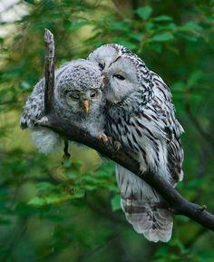 Mom's calming whisper ♥  #owlet