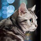Cat Training   Catster