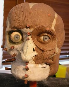 to Do a Forensic Facial Reconstruction Forensic Facial ReconstructionForensic Facial Reconstruction Forensic Artist, Forensic Science, Forensic Facial Reconstruction, How To Do Facial, Body Farm, Head Anatomy, Sculpting Tutorials, Police, Forensic Anthropology