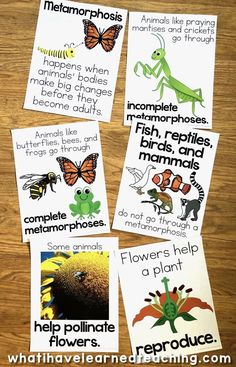 Do you need some butterfly teaching ideas to enhance your unit on butterfly life cycle or butterfly migration? We have a Unit all about metamorphosis and pollination that includes resources about butterfly life cycle. Teaching Second Grade, First Grade Teachers, Third Grade, Fourth Grade, Sequencing Activities, Science Activities, Science Centers, Kindergarten Science, Teaching Science