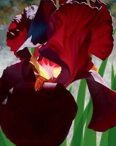 Limited Editions by Brian Davis-Deep Red Iris Aflame