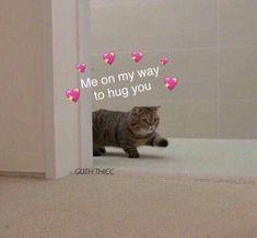 Funny Animal Jokes, Cute Funny Animals, Animal Memes, Cute Baby Animals, Funny Cute, Hilarious, Wholesome Pictures, Cute Love Memes, Cute Love Pics