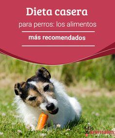 Dieta casera para perros: los alimentos más recomendados - Mis animales  Si estás pensando en un plan alimenticio para tu mascota, encuentra en este artículo algunas recomendaciones para la dieta casera de tu pequeño amigo.