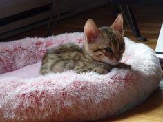 Kira dans son nouveau lit douillet