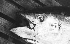 Heinz Homatsch tokyo fish market  contemporary wine