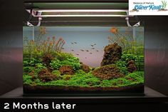 Great tutorial on aquascaping a planted aquarium...step-by-step instructions w/lots of photos. : )