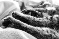 Neue Mitbewohner auf vier Pfoten Adoption, Switzerland, Cats, Blog, Animals, Kitty, Roommates, Foster Care Adoption, Gatos
