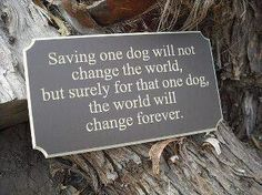 save an animal ~ In turn that animal will save you with unconditional love!!!