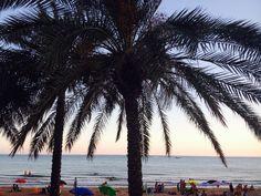Palme sul lungomare di Marina di Ragusa, Sicilia #oltreilbalcone #viaggi #estate #mare #summer #Sicily #pianta #green