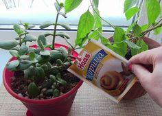 sko Korn, House Plants, Snack Recipes, Chips, Gardening, Indoor House Plants, Snack Mix Recipes, Appetizer Recipes, Potato Chip