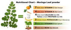 INTRODUCING THE MORINGA TREE  Moringa Seeds, Moringa nutritional facts,Moringa pkm1 Seed,moringa oil