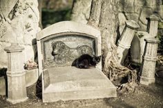 black cat in Pet cemetery in Paris Cemetery Monuments, Cemetery Headstones, Old Cemeteries, Graveyards, Statues, Pet Cemetery, Catacombs, Illustrations, Macabre