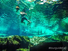 100% visibility gives you new opportunities for underwater photography.   #tourguidekay #privatetours #kaytours #cenotes #rivieramaya #playadelcarmen #tulum #cancun #mexico #traveltips
