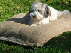 Bed, Dogs, Animals, Toss Pillows, Animales, Stream Bed, Animaux, Pet Dogs, Doggies