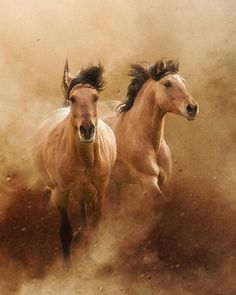 I want a mustang that looks like these when I'm older All The Pretty Horses, Beautiful Horses, Animals Beautiful, Cute Animals, Horse Pictures, Animal Pictures, White Horses, Portraits, Equine Art