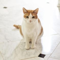 On #caturday, Edmund shames me for how long it's been since I scrubbed the grout. Nothing like a cat's scorn and judgment, is there?