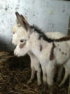 Donkeys so cute how people can kill, them for « pleasure» ....