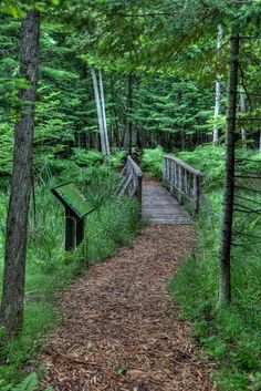 Thorne Swift Nature Preserve in Harbor Springs - awesome place for hiking and exploring.  #PetoskeyArea  http://www.PetoskeyArea.com