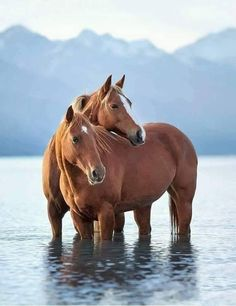 Most Beautiful Horses, All The Pretty Horses, Cute Horses, Horse Love, Horse Photos, Horse Pictures, Beautiful Creatures, Animals Beautiful, Animals And Pets