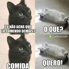 Top Memes, Funny Memes, Gaster Blaster, Turn Down For What, Word Cat, Little Memes, Comedy Memes, Memes Status, Most Beautiful Cat Breeds