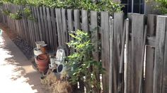 Residential Shurb care Services in Santa Fall Clean Up, Pebble Beach, Spring And Fall, Santa Barbara, Landscape, Plants, Scenery, Plant, Corner Landscaping