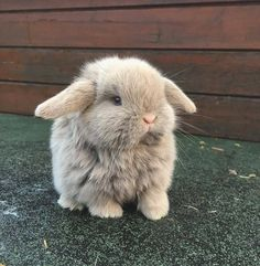 Great potography with cute bunnies - Süße Tiere - animals Baby Animals Super Cute, Cute Baby Bunnies, Cute Little Animals, Cute Funny Animals, Adorable Bunnies, Funny Dogs, Baby Animals Pictures, Cute Animal Photos, Fluffy Animals