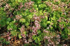 image (400×266) Fruit, Image, Plants