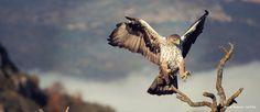 Alange es Ornitología