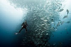 Oceanography Majors, unbelievable images for Oceanographers and Marine Biologists