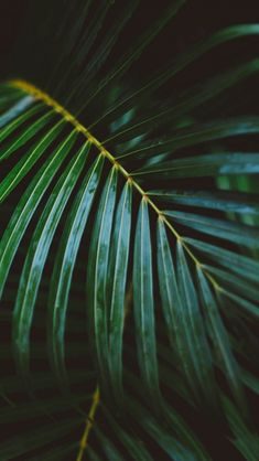 Palm Frond Leafy Branch #iPhone #5s #wallpaper