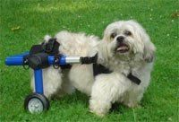 Dog Wheelchair - XSmall - Made By Walkin' Wheels - http://www.thepuppy.org/dog-wheelchair-xsmall-made-by-walkin-wheels/