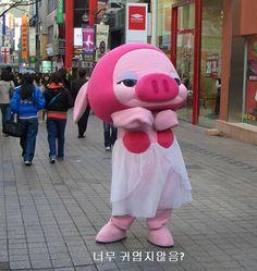 Niedliches Schweinchen als Maskottchen #cutepig #Koreawelle