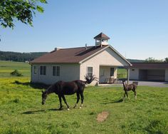 Horses playing out front of a local Amish school house - John Galascione Photography
