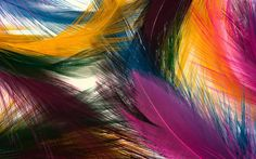 Paintings feathers - wallpaper download