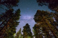 The tops of redwood trees frame a night sky showing the milky way.