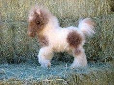 Bebé Pony