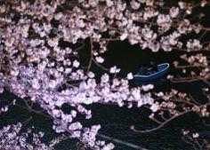 Fiori di ciliegio come fiocchi di neve: spettacolo sakura di notte
