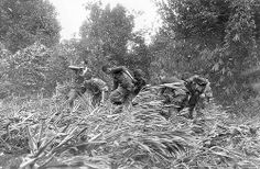Photographer Larry Burrows, far left, struggles through elephant grass and the rotorwash of an American evacuation helicopter as he helps GIs to carry a wounded buddy on a stretcher from the jungle to the helicopter in Mimot, Cambodia, May 4, 1970. The evacuation was during the U.S. incursion into Cambodia during the Vietnam War.