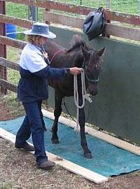 Basics of Natural Horsemanship | Natural Horse World