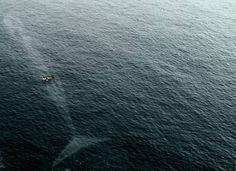 scary sea-whale