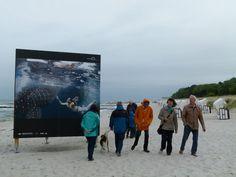 Fotofestival Horizonte 2013 in Zingst | Giganten der Meere am Strand von Zingst (c) Frank Koebsch (5)