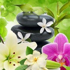 KAI Type Fragrance Oil