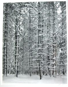 One of my favorite landscape photographers. Although he's everyone's...   Pine forest in the snow by  Ansel Adams