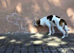Classic dog antics!