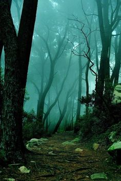 Sintra forest, Portugal by Ari Bixhorn