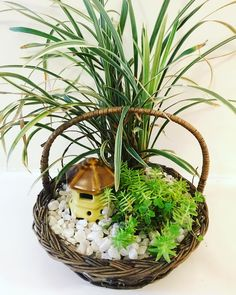 Mini garden in a basket! A bright window side is perfect to display this beautiful cane basket indoors. Will make an ideal gift for someone you love. Call us to book yours today. #greenhousedesignspace #greenhousebangalore #greengifts #gardenaccessories #bangalore #bengaluru #bangalorediaries #plants #gogreen #naturelove #lovefornature #indoorplants #homedecor #indoorplantsdecor #greenhome #goodvibes #plantsmakepeoplehappy #plantsofinstagram #planters #urbanjungle #urbangardening #urbanju...